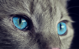 cat, animal, cat's eyes